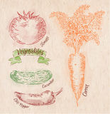 Verdure carota, pomodoro, peperoncini, cetriolo Immagini Stock
