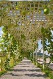 Verdure che placcano nell'azienda agricola moderna, Tailandia Immagine Stock
