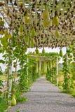 Verdure che placcano nell'azienda agricola moderna, Tailandia Fotografie Stock Libere da Diritti