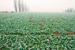 Verdure congelate in giorno freddo Fotografia Stock