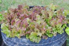 Verdure crescenti Fotografie Stock Libere da Diritti