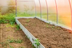 Verdure crescenti in una serra nel paese Alto giardino per la piantatura delle verdure fotografia stock libera da diritti
