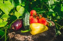 Verdure crude di estate fresca deliziosa Fotografia Stock