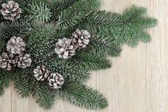 Verdure d'hiver de Milou Photographie stock