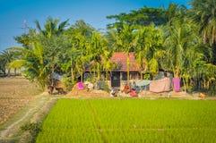 Verdure dans le Bengale-Occidental Images stock