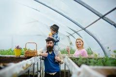 Verdure de famille verdure croissante de famille pendant la vie la verdure de famille est bon passe-temps concept de verdure de f image libre de droits