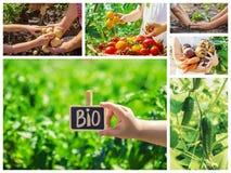 Verdure del collage Giardino Alimento bio- Fuoco selettivo immagini stock