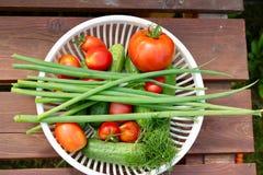 Verdure del giardino immagine stock libera da diritti