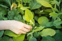 Verdure del raccolto fotografia stock libera da diritti