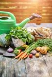 Verdure del raccolto con le erbe e le spezie immagini stock