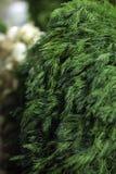Verdure del trapano Fotografia Stock