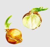 Verdure dell'acquerello Imposti le cipolle Tagli la cipolla Fotografia Stock Libera da Diritti