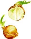 Verdure dell'acquerello Imposti le cipolle Tagli la cipolla Fotografia Stock