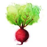 Verdure dell'acquerello messe: Barbabietola Fotografia Stock Libera da Diritti