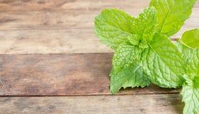 verdure della menta fresca Fotografia Stock