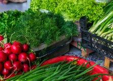 Verdure della primavera - cipolla, ravanello, aneto, insalata da vendere Fotografia Stock Libera da Diritti