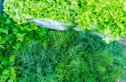 Verdure della primavera - cipolla, ravanello, aneto, insalata da vendere Fotografia Stock