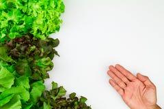 Verdure di insalata verde fresche con la mano del ` s dell'uomo su fondo bianco con lo spazio della copia Fotografie Stock Libere da Diritti