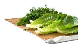 Verdure di secchezza Immagine Stock