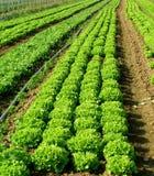 Verdure di Springtame Fotografia Stock Libera da Diritti