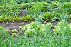 Verdure differenti su una terra dell'orto Fotografia Stock Libera da Diritti