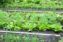 Verdure differenti su una toppa Fotografia Stock