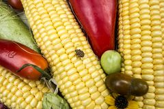 verdure e cereale Fotografie Stock