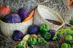 Verdure e frutta/raccolto Fotografie Stock Libere da Diritti
