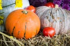 Verdure e frutta/raccolto Immagini Stock Libere da Diritti