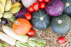 Verdure e frutta/raccolto Fotografia Stock