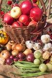 Verdure e mele in un canestro Giorno di autunno nel giardino domestico Alimento sano per la dieta Giorno pieno di sole Immagine Stock
