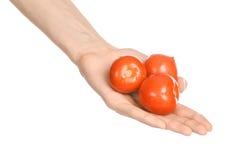 Verdure e tema di cottura: la mano dell'uomo che giudica tre pomodori maturi rossi isolati su un fondo bianco in studio Immagini Stock