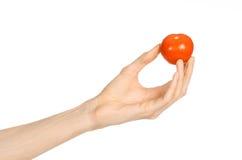 Verdure e tema di cottura: la mano dell'uomo che giudica un pomodoro maturo rosso isolato su fondo bianco in studio Fotografia Stock
