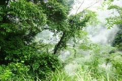 Verdure et brouillard secteur de montagnes dans de Kirishima de Hotspring/Ebino kogen, Japon photo stock