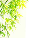 Verdure flourish bamboo foliage Stock Images