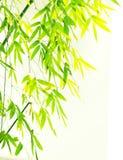 Verdure Flourish Bamboo Foliage Stock Images