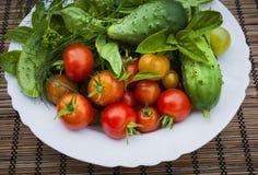Verdure fresche del giardino Immagini Stock Libere da Diritti