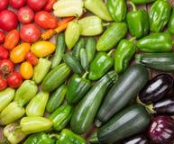 Verdure fresche del giardino degli agricoltori Immagini Stock