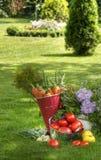 verdure fresche delle piante fotografia stock