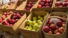 Verdure fresche di autunno Fotografia Stock Libera da Diritti
