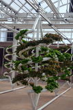 Verdure idroponiche Fotografia Stock