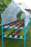 Verdure idroponiche crescenti Fotografia Stock Libera da Diritti