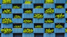 Verdure idroponiche del giardino in piccoli contenitori Fotografie Stock Libere da Diritti