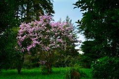 Verdure jardin botanique en Géorgie, Batumi Photos stock