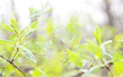 The verdure leaves. At sunshine day in the fores Stock Photo