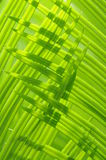 verdure leaves in  sunshine. The verdure new leaves of the cycad tree,weaving green lines Stock Photos