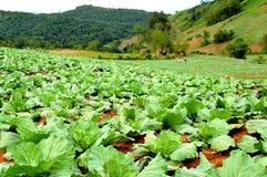 Verdure nella valle Fotografia Stock Libera da Diritti