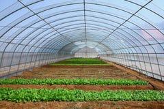Verdure nelle serre Immagine Stock Libera da Diritti