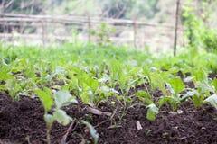 Verdure organiche Immagini Stock Libere da Diritti