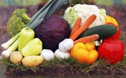 Verdure organiche fotografia stock